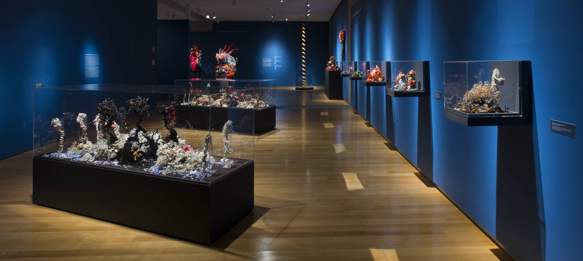 Coral reefs exhibited in glass vitrines in a room with blue walls.