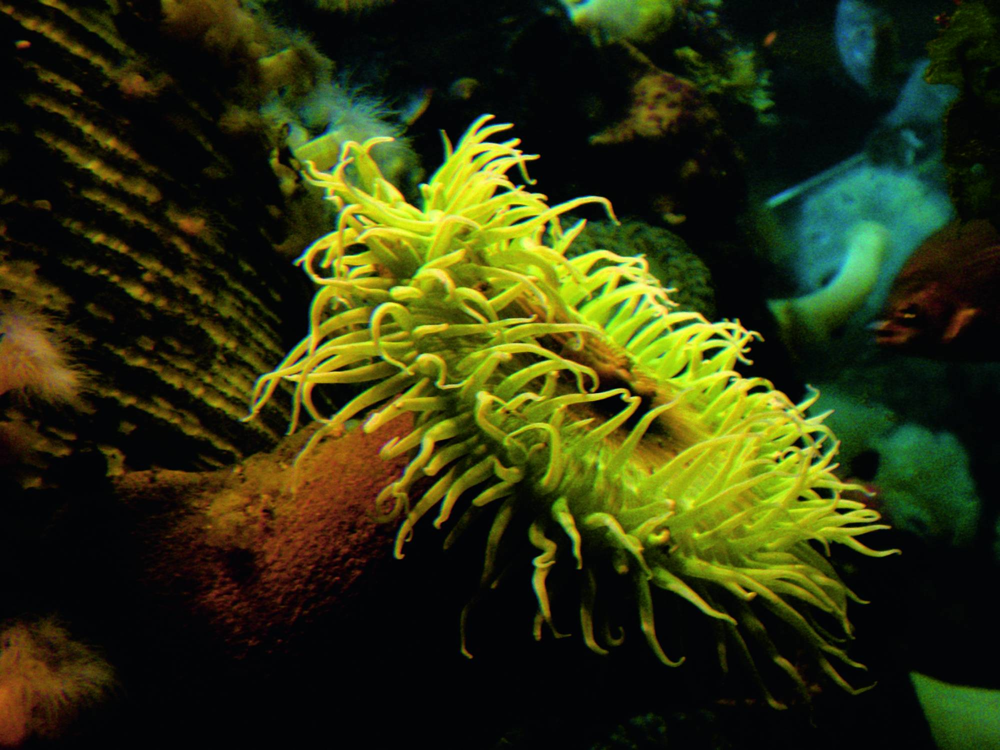 Green underwater creature with tentacles