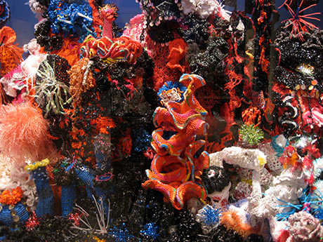 Detail of crochet coral reef sculptures installed in a glass vitrine in gallery.
