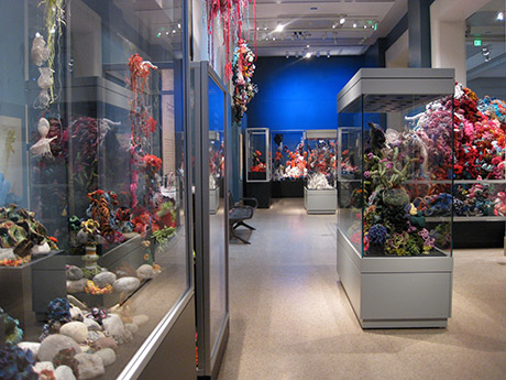 View of gallery containing glass vitrines filled with crochet coral reef sculptures.