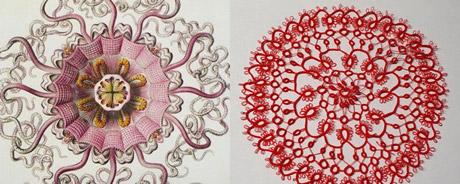 Two images side by side: left, a drawing of a closeup view of a sea creature. At right, a round doily made of red lace.