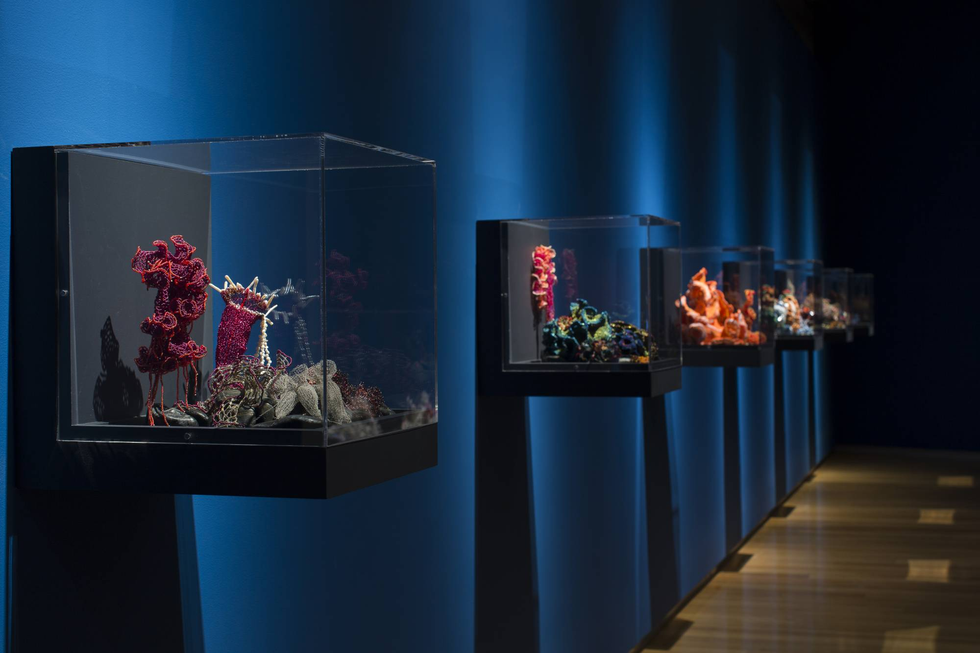 Reef sculptures in glass vitrines in gallery