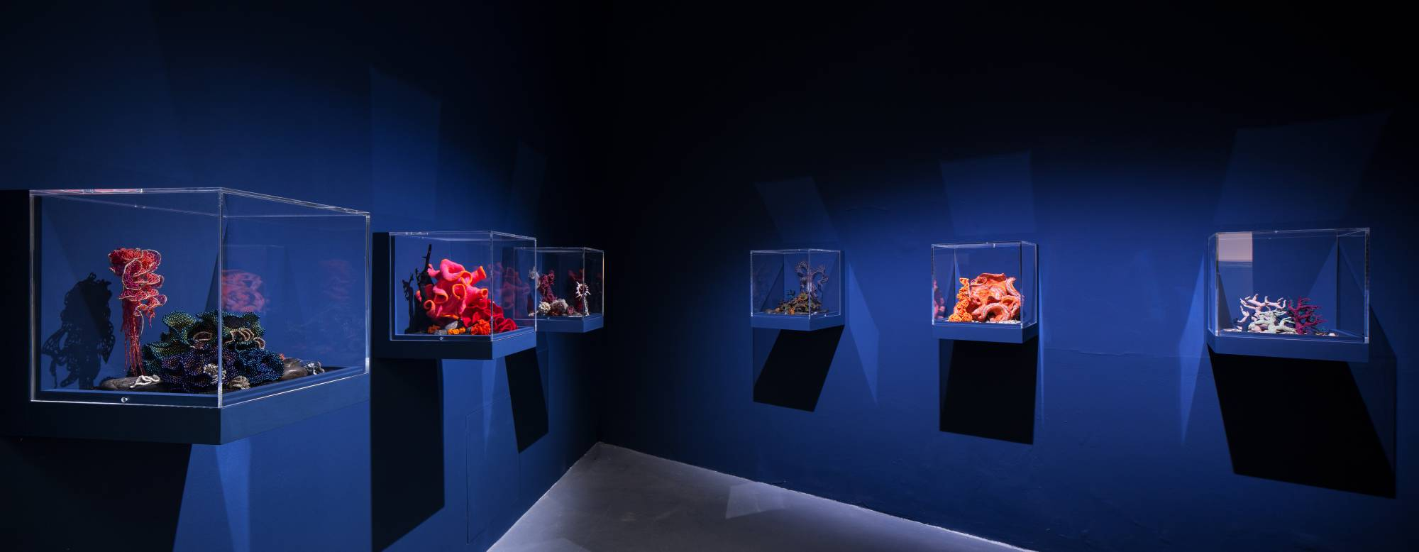 Six reef sculptures in glass vitrines in gallery with striking blue background