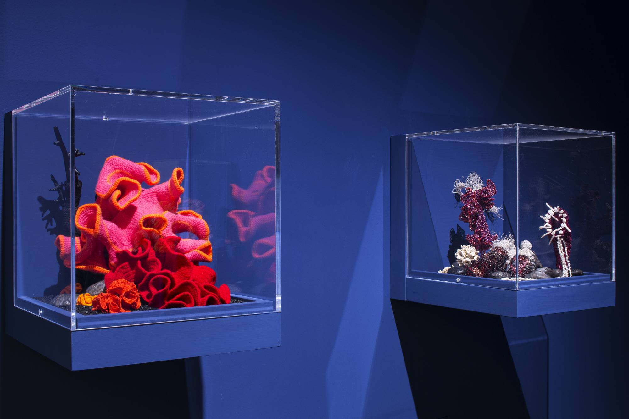 Two reef sculptures in glass vitrines in gallery with striking blue background
